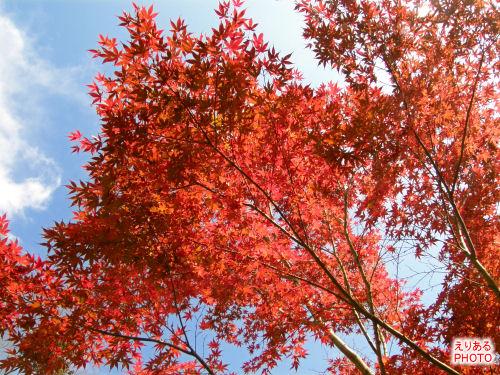 熱海梅園の紅葉2009