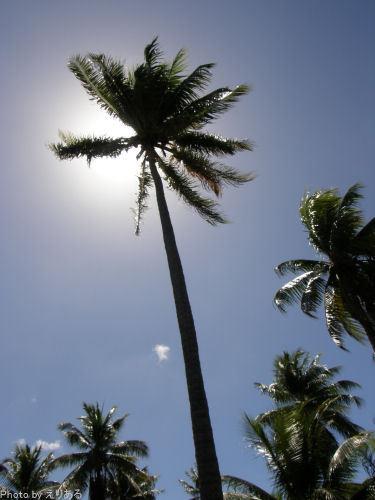 背の高いヤシの木