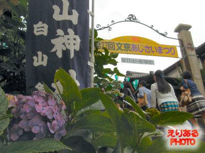 第27回 文京あじさいまつり@白山神社 2011年