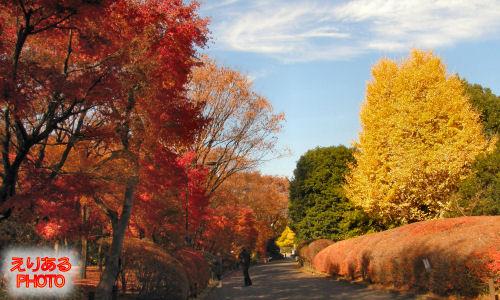北の丸公園の紅葉2011