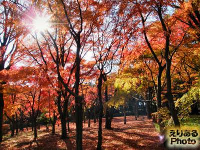 2013年北の丸公園の紅葉