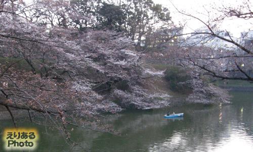 千鳥ヶ淵の咲き始めた桜