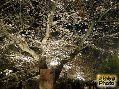 千鳥ヶ淵緑道の桜2014