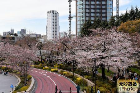 2017年東京ミッドタウンの桜
