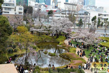 2017年毛利庭園の桜