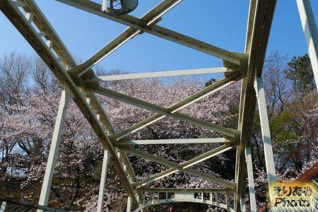 2017年飛鳥山公園の桜