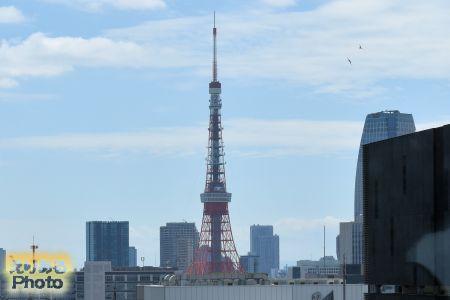 屋上庭園「GINZA SIX ガーデン」から望む東京タワー