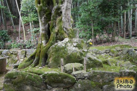 竹の寺 地蔵院