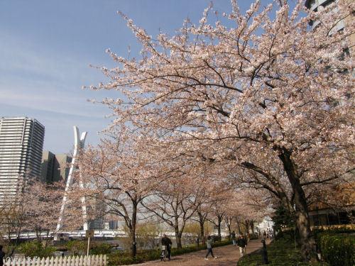 リバーシティ21 隅田川沿いの桜