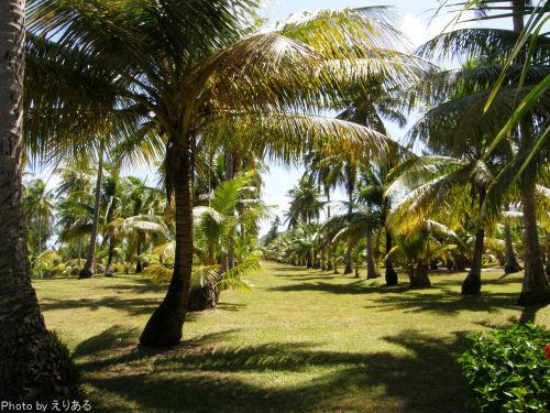 千本椰子林