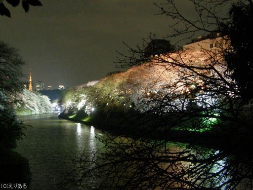 千鳥ヶ淵夜桜2008