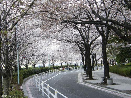 新川公園そばの桜と散った桜の花びら
