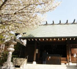住吉神社の本殿と桜