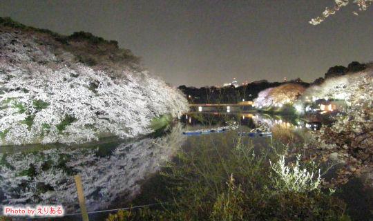 千鳥ヶ淵夜桜2009