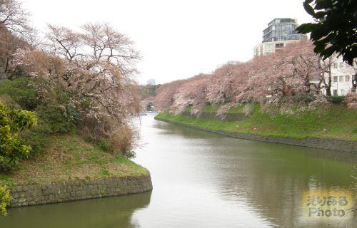 千鳥ヶ淵桜2010