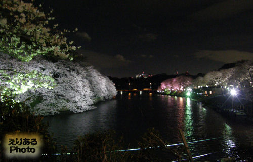 千鳥ヶ淵夜桜2010