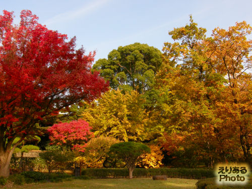 東御苑の紅葉