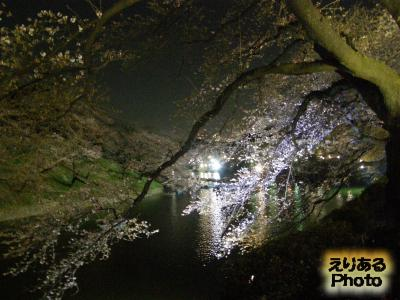 千鳥ヶ淵夜桜2014