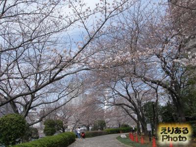 大川端リバーシティ21・佃公園周辺の桜2014
