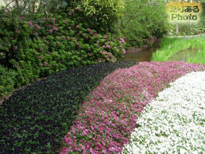 イクスピアリのガーデン・サイトの花々2014年4月