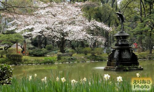 日比谷公園の桜2015