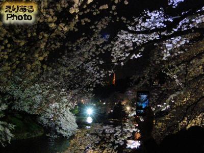 隅田公園と墨堤通りの桜