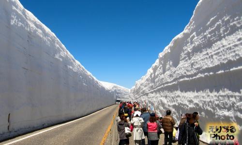 立山・雪の大谷ウォーク