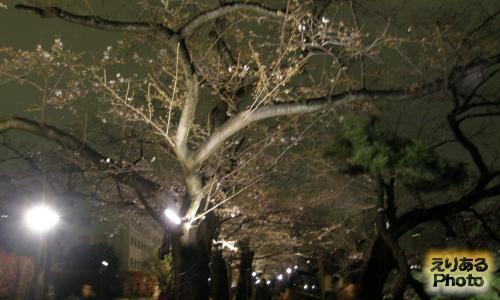 千鳥ヶ淵緑道ライトアップされた夜桜2016