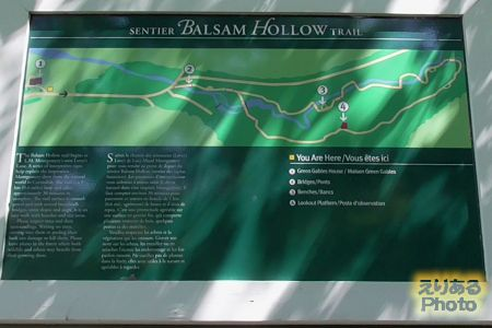 The Balsam Hollow Trail(恋人の小径)