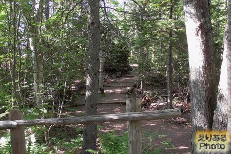 Haunted Wood Trail(お化けの森)