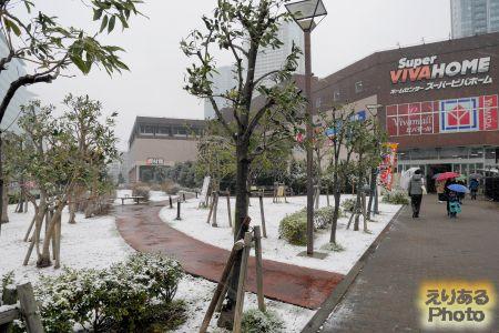 2019年豊洲の雪