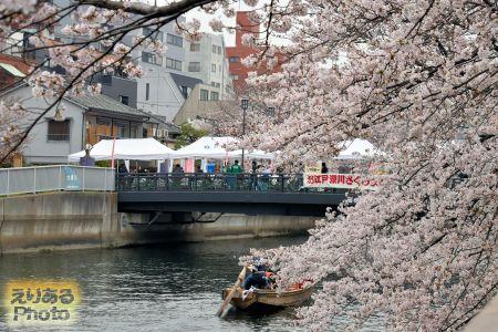 お江戸深川さくらまつり、大横川沿いの桜 2019年