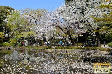 靖国神社の桜 2019年