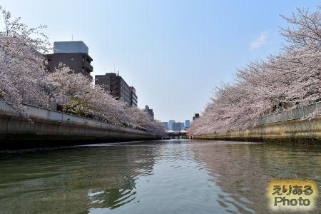 お江戸深川さくらまつり2019