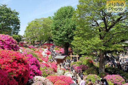 根津神社のつつじ2019年